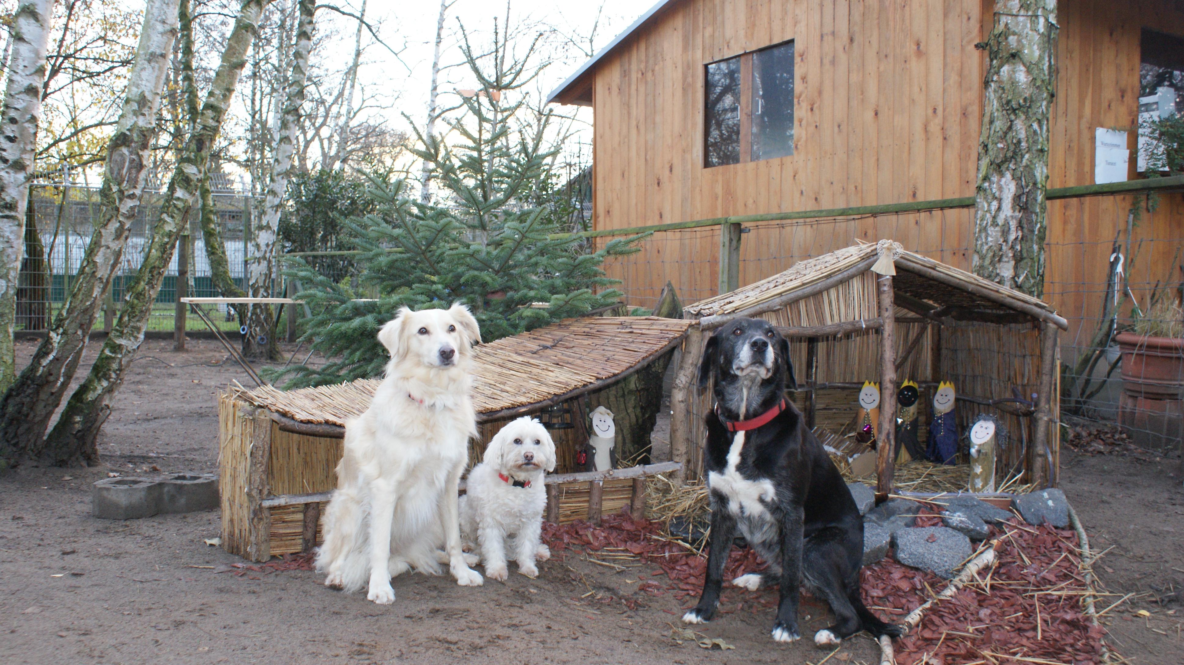 Hunde Darmstadt